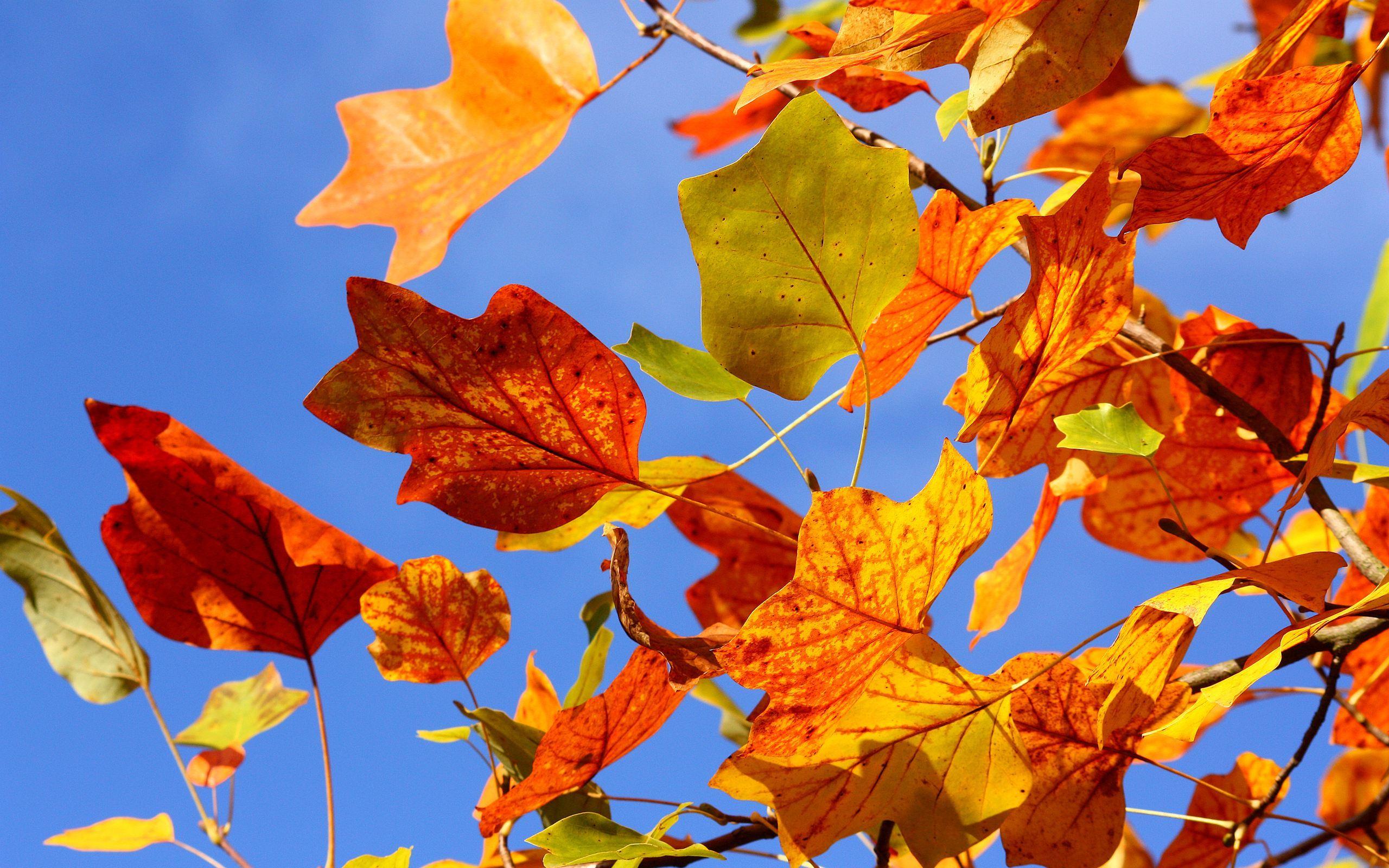 Картинки осень желтые листья